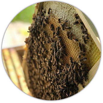 Bee farming supplies and bees