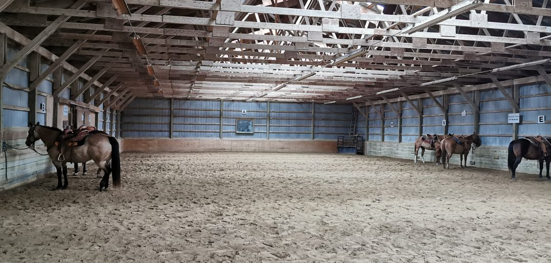 Horses in an arena in Port Hope